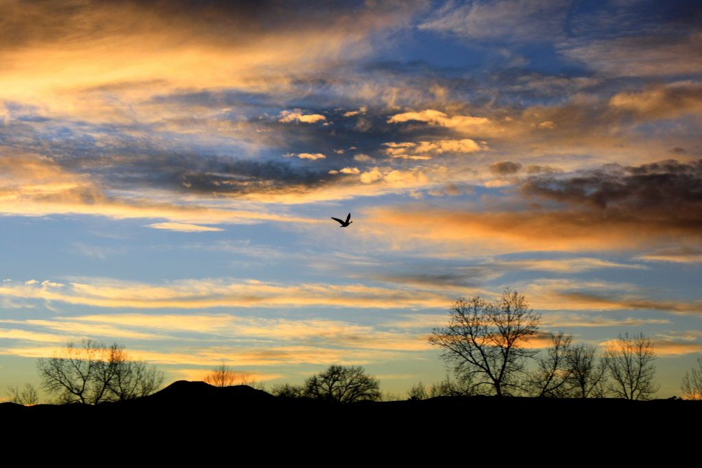 Silhouette of horizon, trees, and flying bird against sunset sky.